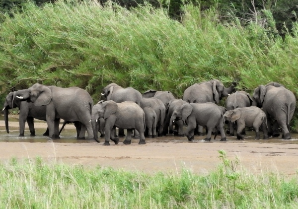 Heard of Elephants at Gqoyeni Bush Camp